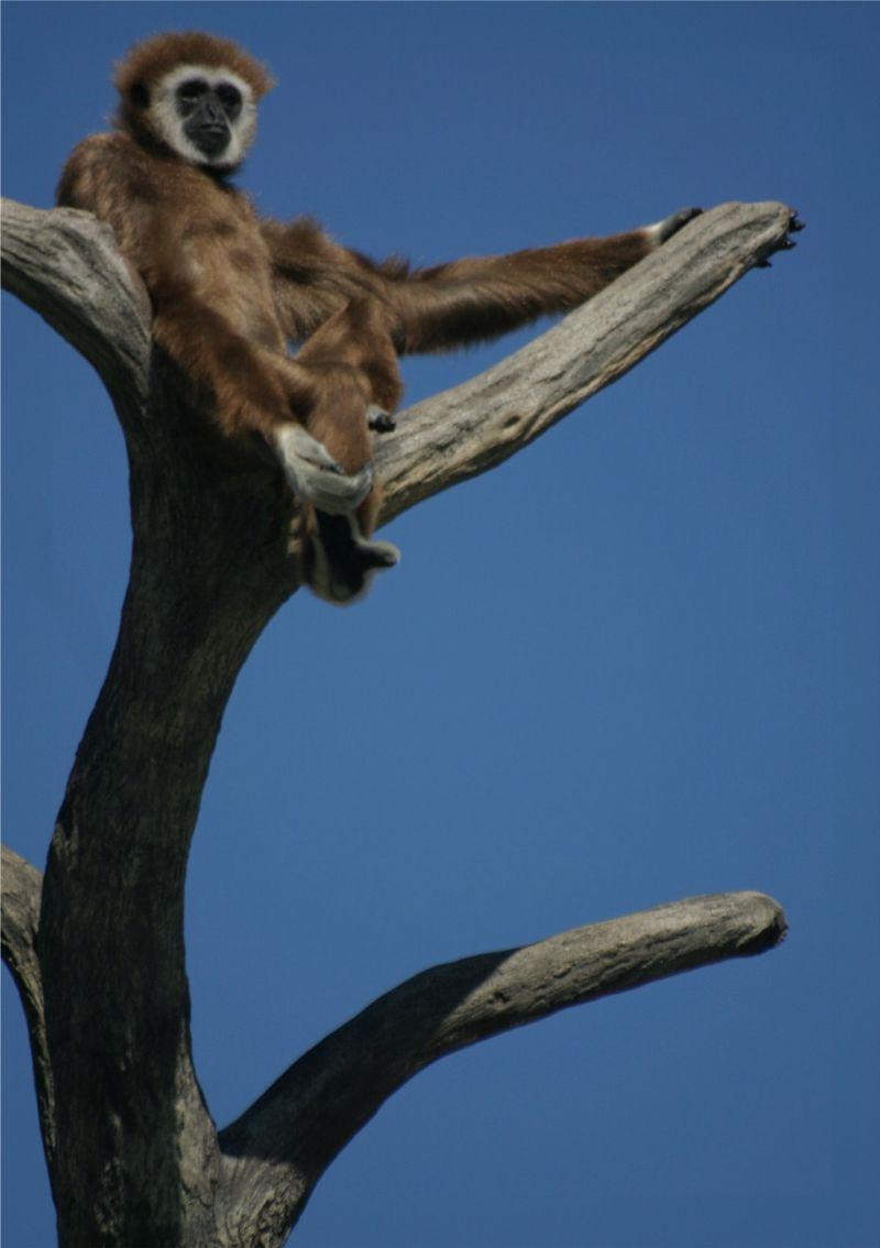 Monkey_tree